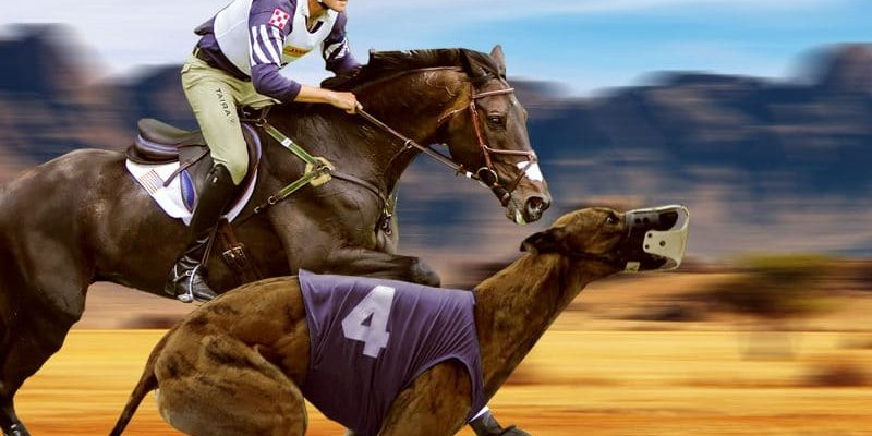 Betting on horse racing online